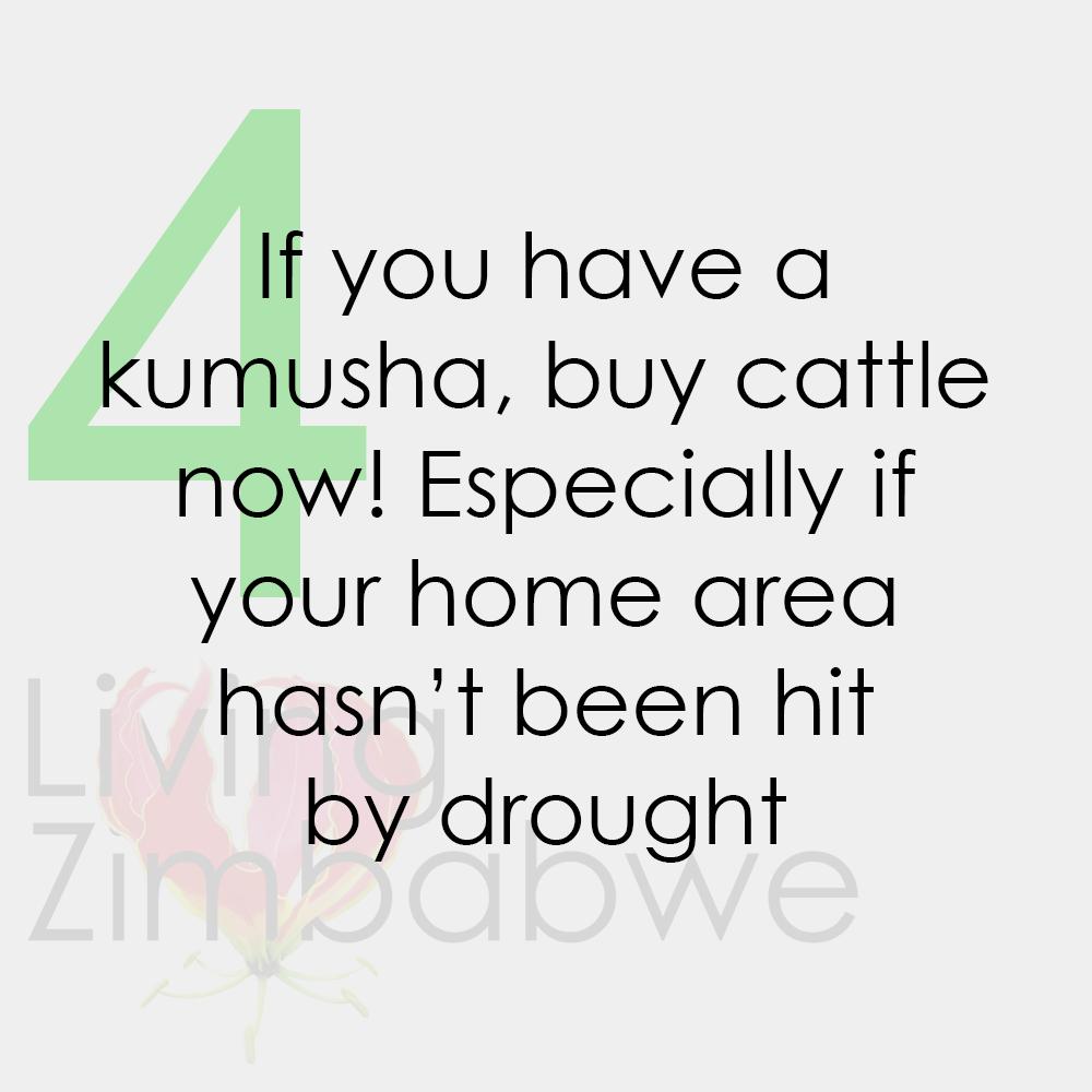 Buy-Cattle-Surviving-Zimbabwe-Bond-Notes-LZ